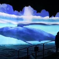 In Pictures: Edinburgh Zoo lights up for Arctic adventure