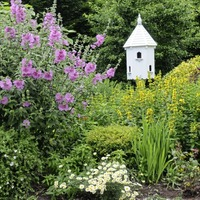 The Casual Gardener: It's still too early to call time on the gardening year
