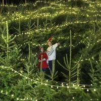 In Pictures: Marmots and maze lit up for Christmas cheer