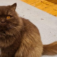 Isle of Wight animal shelter in bid to reunite Russian cat with owners