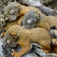 Good neighbours help squirrels survive, research suggests