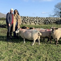 A Mourne love yarn for the Covid age