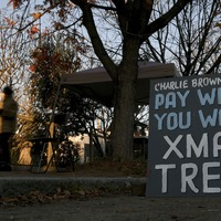 Scrawny Christmas trees lift spirits and raise funds for school