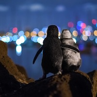 Image of penguins with their flippers around each other wins photography prize