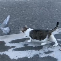 Larry the cat's tussle with pigeon on Downing Street adds to Brexit drama