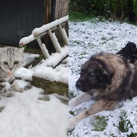 Rescues, police dogs and cats on leads brave snow as cold snap hits UK