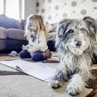 Ask the Expert: How can I stop my child being afraid of dogs?