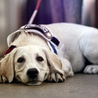 Seoul to give free Covid-19 tests to pets