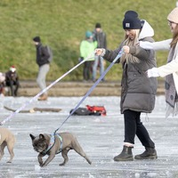In Pictures: Mush! Scots get their skates on