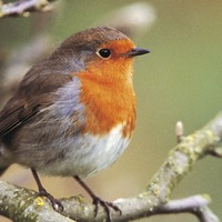 Nature can provide 'soul food' for people in lockdown – RSPB