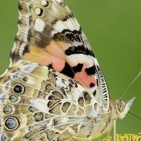 Gardening: Six ways to rewild your garden and help save butterflies