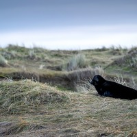 Rare black-coloured pups spotted among England's largest grey seal colony