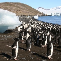 Network of marine protected areas 'could help safeguard Antarctic penguins'