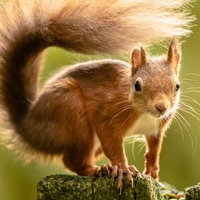 Charles thanks volunteers fighting to protect 'delightful' red squirrels