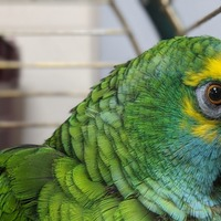 Bud the parrot slims down after crisps ban