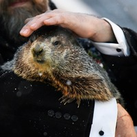 Groundhog Day: Punxsutawney Phil predicts six more weeks of winter