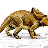 Study sheds light on how sheep-sized dinosaur developed 'huge' neck frill