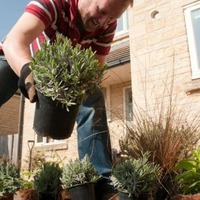 UK's front gardens have got greener in the past five years, survey suggests