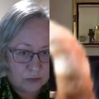 When video calls go wrong: Cat filters, potato bosses and chaotic town meetings
