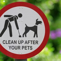 Dog fouling on Belfast streets increases by 200% during lockdown