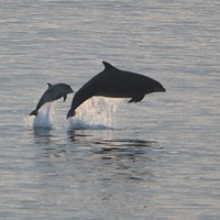 Slaughter of dolphins on Faroe Islands reignites animal rights debate
