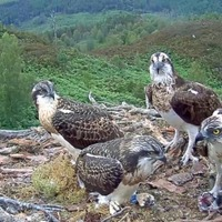 Highland ospreys have names migrated to Mars