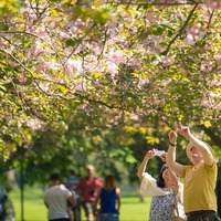 Blossoming trees to be planted across UK 'to help signal hope' after pandemic