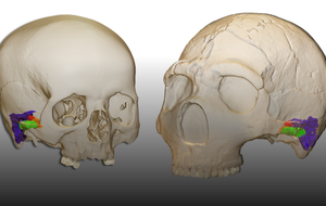 Neanderthals had the capacity to produce human-like speech, scientists claim