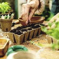 The Casual Gardener: Sowing seeds of hope