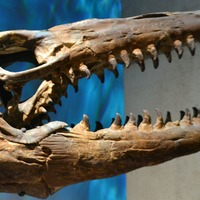 Diet of early lizards and snakes 'more varied than previously thought'