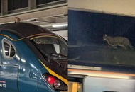 Mind the cat! Train taken out of service after feline spotted on roof