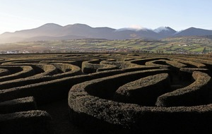 Castlewellan maze listed among 'once famous' world attractions