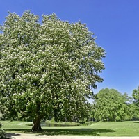 Stephen Colton's Take On Nature: Underneath the spreading chestnut tree