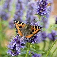 Gardening: Seven ways to have a spring wellbeing experience in your garden