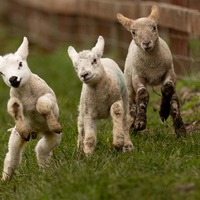 In Pictures: It's official – spring has sprung