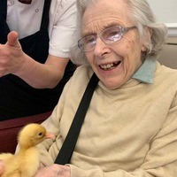 Chicks hatched in care homes to boost residents' well-being