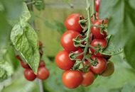The Casual Gardener: From little seeds to major toms