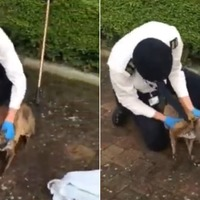 Fox rescued after getting head stuck in plastic bottle