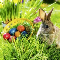 Stay safe at Easter by following Covid-19 regulations, Health Minister Robin Swann urges