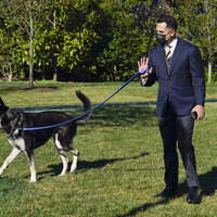 Biden dog Major to get private training after biting incidents