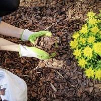 Casual Gardener: Mulching makes good sense to save time and water