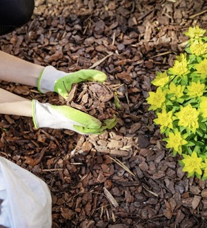 Casual Gardener: Mulching makes good sense to save time and water