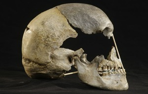 'Oldest modern human genome' reconstructed from 45,000-year-old female skull