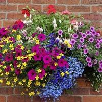 Gardening: How to make hanging baskets out of throwaway junk