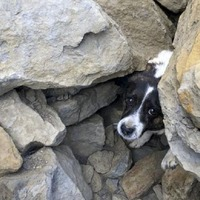 Dog missing for three days rescued after being found trapped under rocks