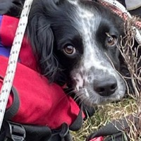 Puppy rescued unharmed after falling 300ft down waterfall