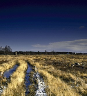 Culloden battlefield maps provide accurate picture of 1746 landscape