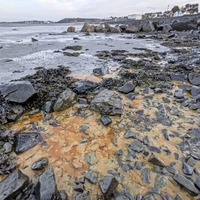 Volunteers clean Co Down beach after diesel spill