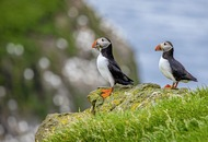 Take on Nature: Atlantic puffin, 'little friar of the north', is now on red list