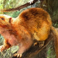 Extinct giant cloud rat species 'twice the size of grey squirrel' discovered